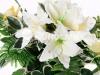 lilii-4