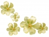 orhideya-17