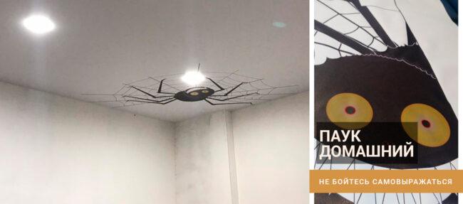 уникальный потолок - паук домашний (фотопечать на натяжном потолке)