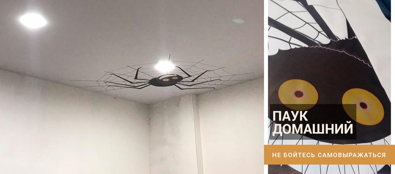 паук домашний - фотопечать на натяжном потолке