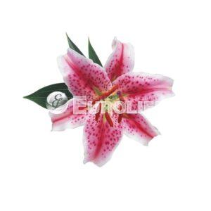 orhideya 1