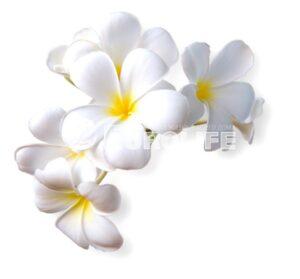 orhideya 18