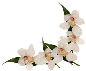 orhideya 19